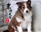 郑州有卖喜乐蒂犬的吗