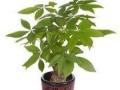 专业花木、植物租摆、批发零售、绿化养护开荒除草