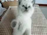 发财小萌猫,喜欢它的看过来。