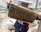 农家自产纯天然蜂蜜