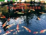 杭州华池园林鱼池景观设计,日本纯正锦鲤鱼售卖!