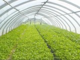 蔬菜大棚遮光和补光技术介绍