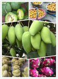 微商空白市场水果微商招代理提供优质水果货源
