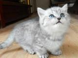 苏州桔子宠物诊所,专家医师坐镇 猫狗物美价廉,包您满意