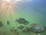 热带鱼及其生态环境