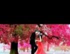 满钻钻石画浪漫樱花树,已装框