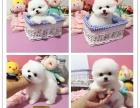 北京宠物狗的品种 北京哪里有狗卖