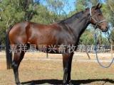 山东顺兴养殖场现大量出售优质种马,肉马,肉驴,种驴,改良肉牛