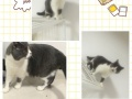 猫舍低价处理各种品种优质猫咪,猫友们不要错过噢