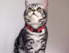 一只喵精品猫咪连锁,各种萌娃等你来带走!