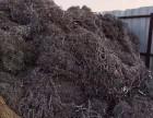 苏州胜浦钼丝塑料废铜不锈钢废铁回收