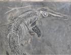 鱼龙化石那里能鉴定价格多少