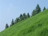 客土喷播边坡绿化矿山恢复矿山复绿