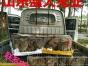 肉兔市场价格.肉兔多少钱一只、肉兔品种