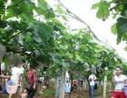 玉明生态园葡萄节玩嗨一夏