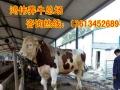 鸿伟养牛合作社养牛牧场