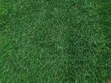 北京園林綠化種植草坪供應山東綠化草坪內蒙綠化草坪山西綠化草坪