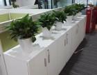 植物租摆 科技园植物出租 厂区植物养护 园区植物销售