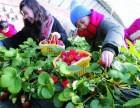 莆田赏油菜花摘草莓特价99元 福州周边哪里好玩