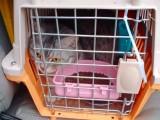 温州宠物猫狗托运 上门服务