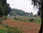 大化镇正义村 土地 4000平米