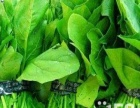 济南牛氏专业蔬菜水果肉配送 国企医院学校幼儿园
