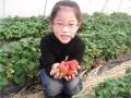 上海近郊农家乐旅游推荐 采草莓吃土菜 钓大鱼游海边