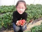 上海农家乐哪里好玩 春季踏青好去处 采草莓钓大鱼吃土菜