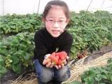 上海农家乐旅游 采草莓摘桔子钓大鱼 烧烤看海 游滴水湖