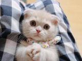 寻爱猫人士,价格可以私聊