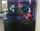 魚缸 水族箱 觀賞魚 專賣
