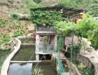 四川凉山特色无烟烧烤,尽在普格县绿源生态农家乐