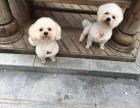 河南省南阳市卧龙区桂花城寻找爱犬