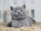 哈尔滨 哪里有卖纯种健康蓝猫 多少钱