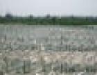 寻找合作养鹅 免费供鹅苗,饲料,技术