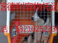 北京信德利宠物托运有限公司