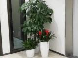 密云专业室内绿植租赁写字楼商务楼植物租摆绿化绿植租摆