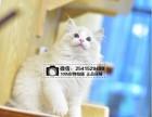 无锡出售布偶猫 无锡哪里卖布偶猫 无锡布偶猫繁殖基地