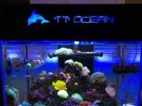 海水鱼缸整缸出售