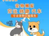 深圳 专业深圳宠物托运 宠物托运一站式服务 免费上门取