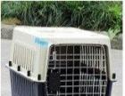 成都天宠宠物托运猫狗空运安全方便快捷