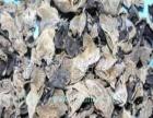 黄松甸食用菌 黄松甸食用菌加盟招商
