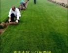 草坪种子花园鲜草皮真草坪绿化草坪人造草坪工地围墙仿真草坪