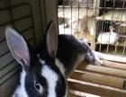 批发零售各种宠物兔和兔粮