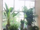 珠海金湾写字楼商务楼植物租摆绿化绿植租摆