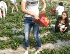 菏泽佃户屯生态园绿色蔬果采摘