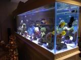 海水鱼缸制作维护