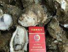 广州湛江生蚝批发,生蚝批发市场价格,生蚝特卖专场
