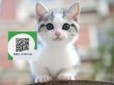 南阳哪里有宠物店 南阳哪里卖宠物猫便宜 南阳虎斑猫价格