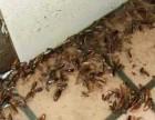 饭店,超市,宾馆灭蟑螂灭鼠